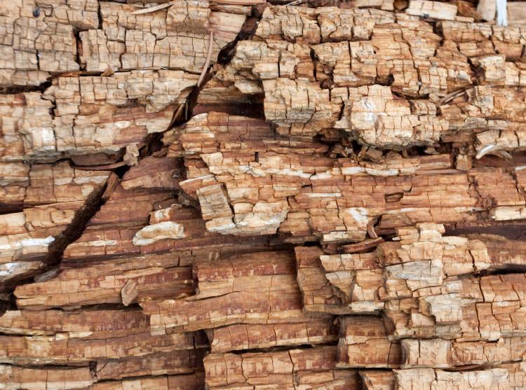 wood-dry-rot-damage-lg
